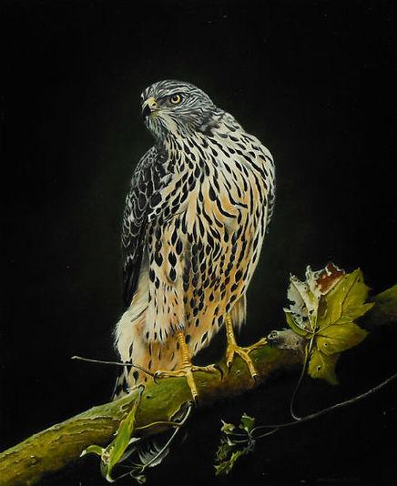Hawk on tree stump