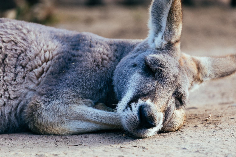 Australia 澳洲