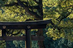Japan 日本