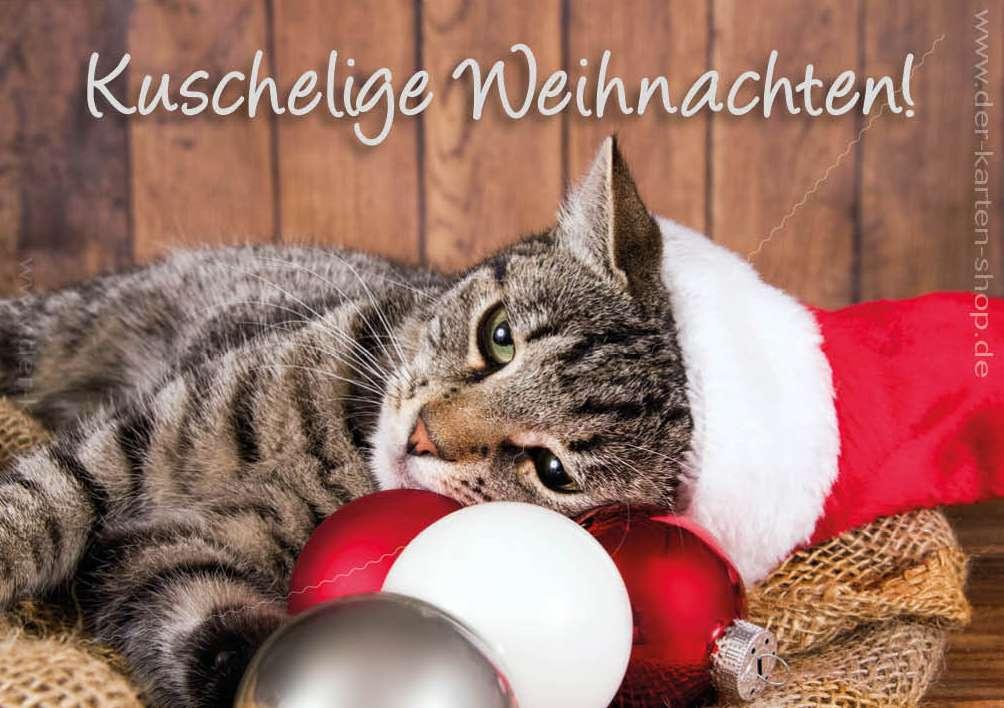 Frohe Weihnachten Katze.Frohe Festtage Und Einen Guten Rutsch Ins 2019 Katzenbetreuung