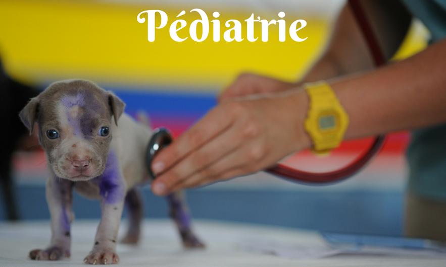 Pediatrie_edited