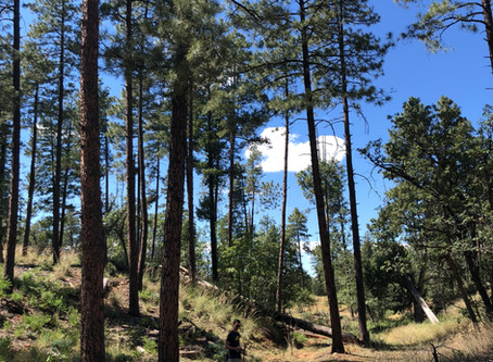 Get Hiking in a Hurry - Pine-Strawberry Trailhead