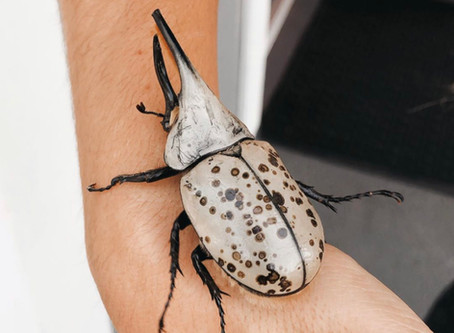 In A World Where You Can Be Anything, Be A Unicorn… BEETLE