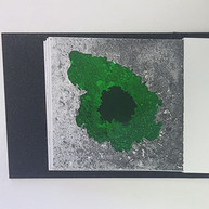 whole book pages green and yellow.jpg