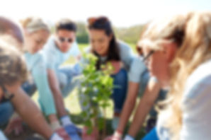 plant-et-tre lash rehab vippeextensions vippeløft
