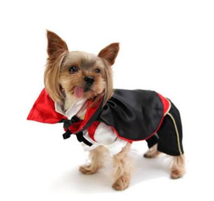 Disfraz vampiro para perros