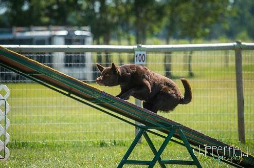 climb dog.JPG