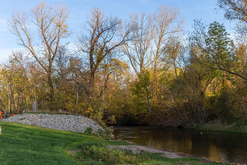 Bäume an einem Flussufer