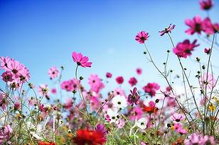 a-fleur-des-champs-8.jpg