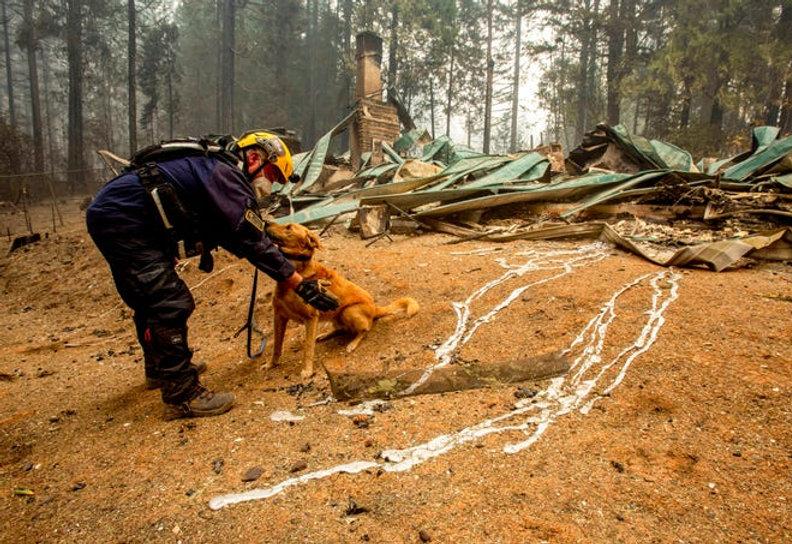 wildfire sar dog.jpg