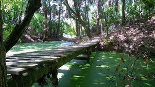 Alafia River State Park, Lithia Florida