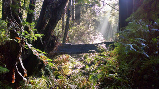 Emerald Forest Cabins & RV Resort, Trinidad, California