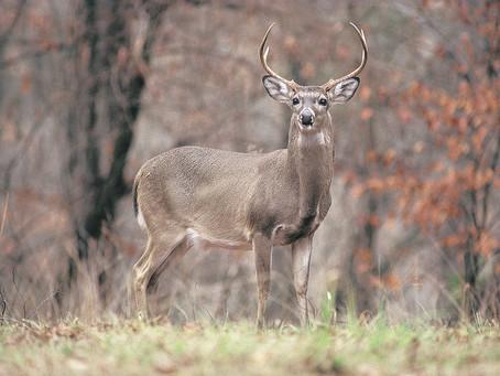 Oak Mountain State Park, Pelham, Alabama