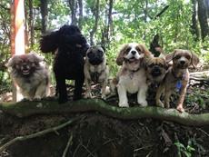 A team littles.jpg