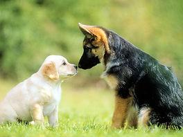 2-Cute Dog 1600x1200.jpg