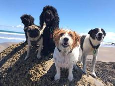 rock dogs.jpg