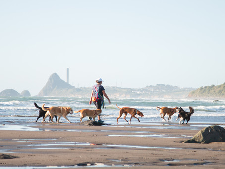 So you want to be a Dog Walker?