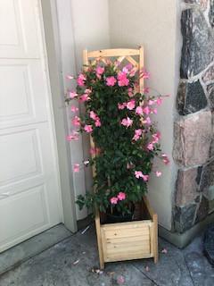 Pink Clementis Planter.jpg