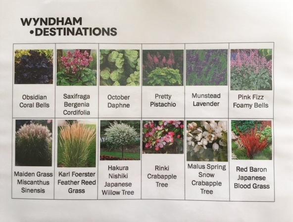 Plants Used.jpg