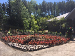 Front garden 2.JPG