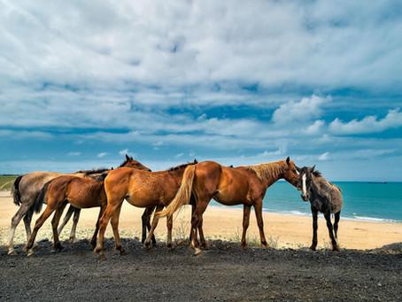 Atlar ve deniz