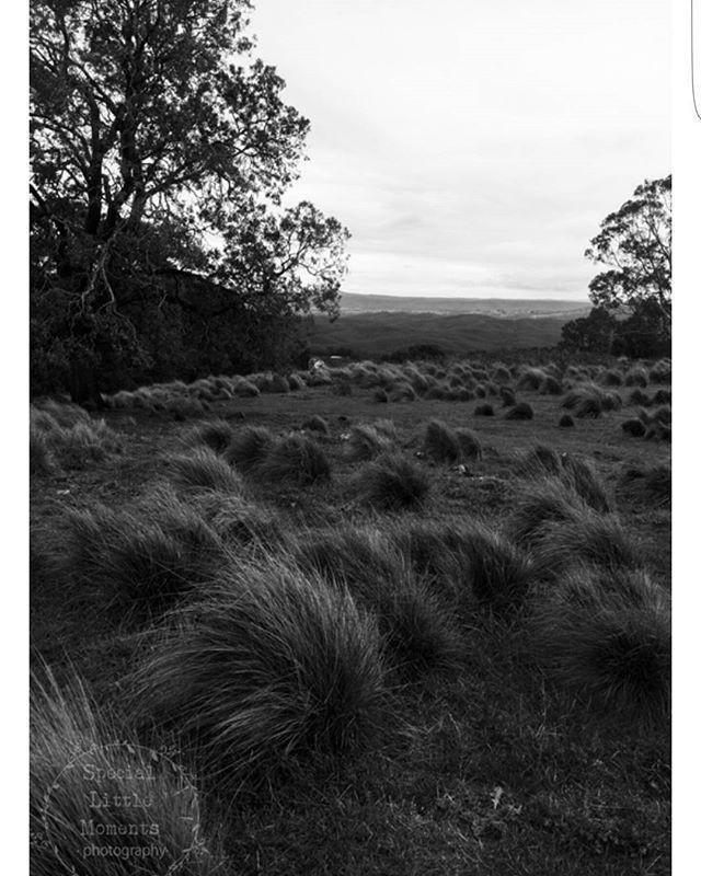 #speciallittlemoments #photography #photographer #artist #printsforsale #nature #bush #freshair