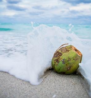 coconut%201_edited.jpg