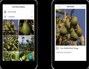 Tree Photo Power App