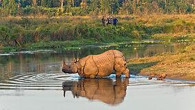 One-horned-rhinoceros-in-Chitwan-Nationa