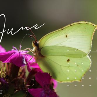 June Desktop Calendar Wallpaper