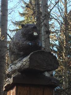 Beaver Head on Cycling Salmon Sculpture