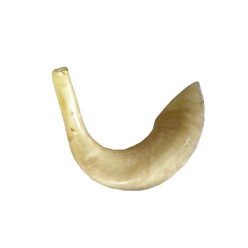 Moroccan shofar 42SH3