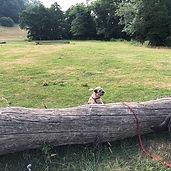 Another fun adventure ! #dogwalking #ham