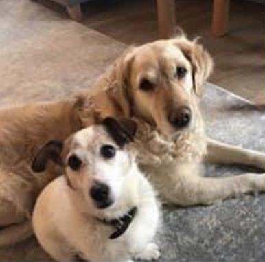 Bailey & Ollie