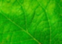 Biodruckfarben.jpg
