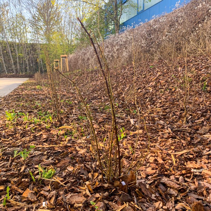 Baumpflanzung