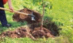 Wir_pflanzen_Bäume.jpg