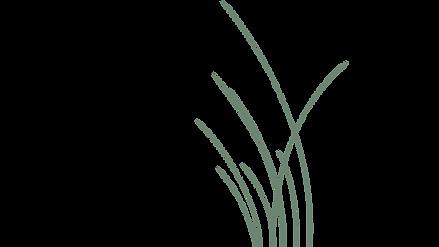 Grass 4.png