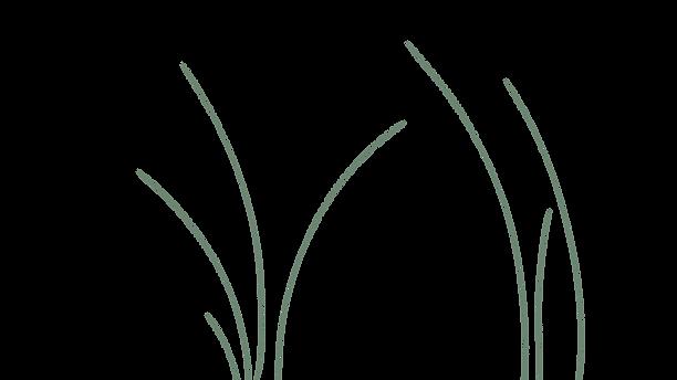 Grass 3.png