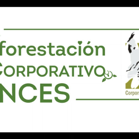 1° Reforestación