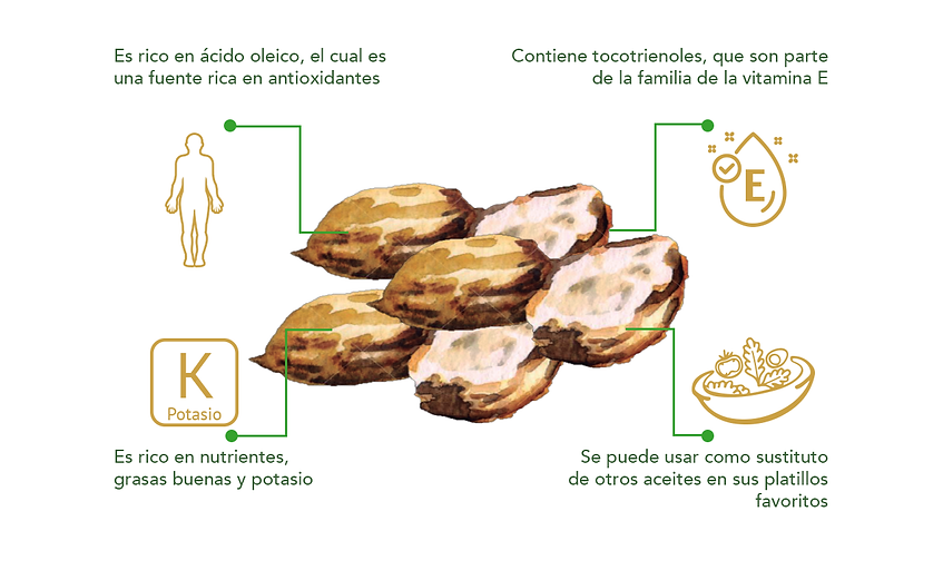 Informacion macadamia.png