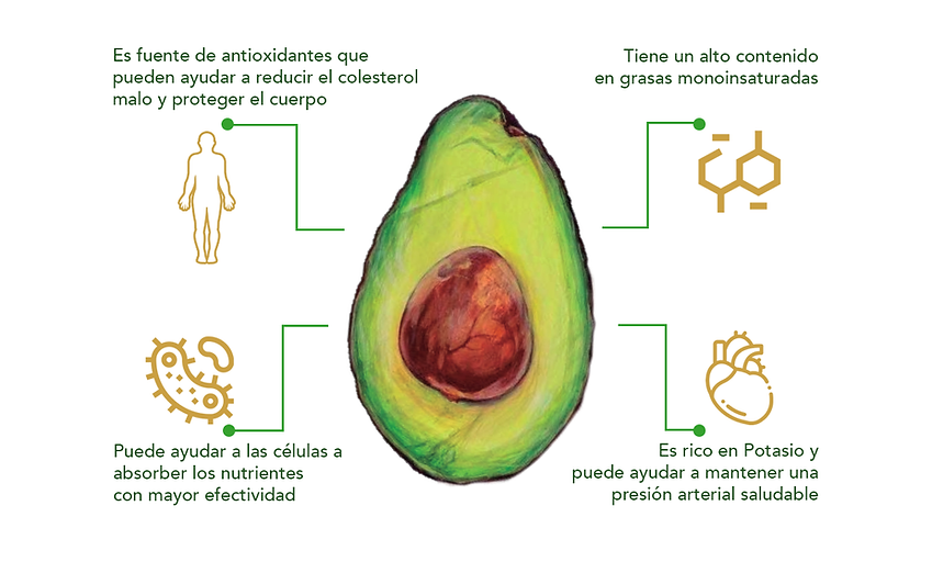 aguacate Informacion.png