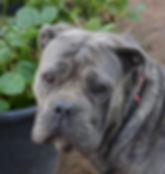dogs 11.03.16 078.JPG