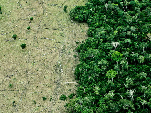 Constructing governance to stop Brazilian deforestation