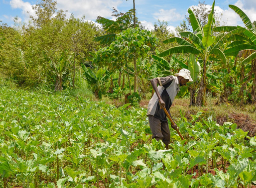 Taking the environment seriously in agricultural global value chains: why it matters to the bottom b