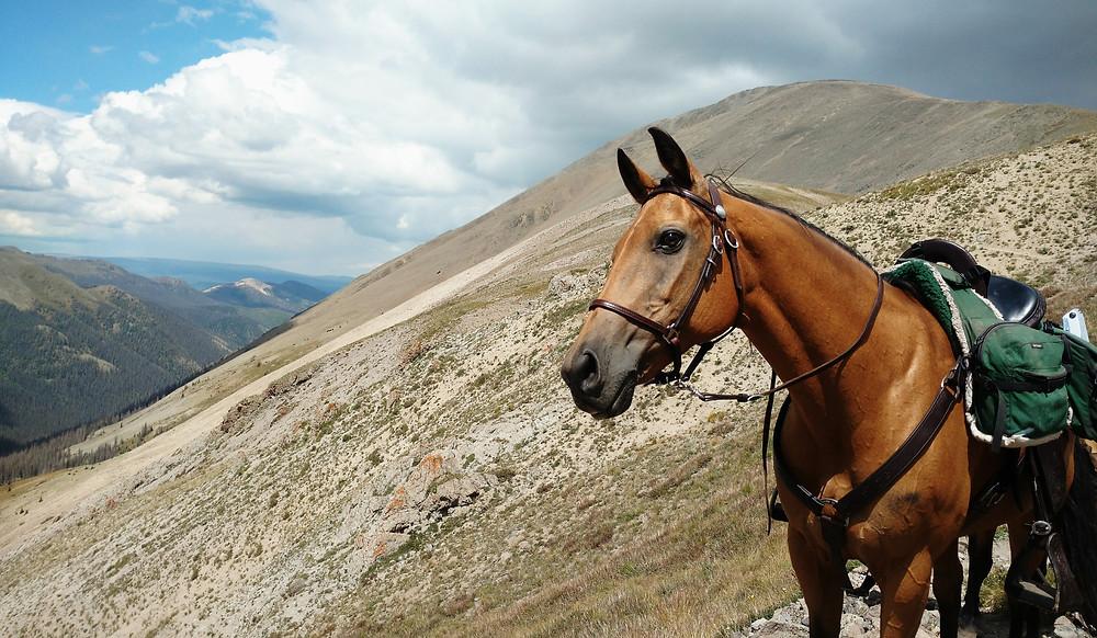 Shyla on the trail