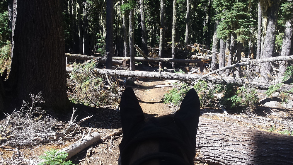 downed trees on the trail in the Sky Lakes area