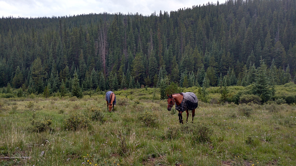 The horses enjoying the grazing at camp