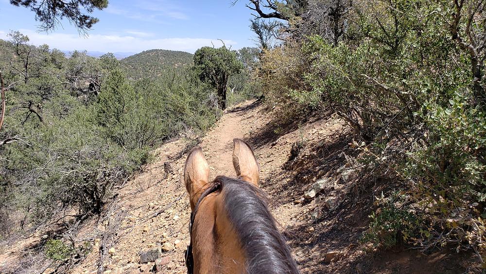 The trail ahead through Shyla's ears