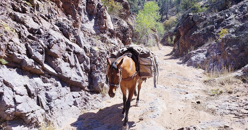 Takoda on the trail north of Lordsburg